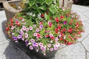 Blumen Stütlihus